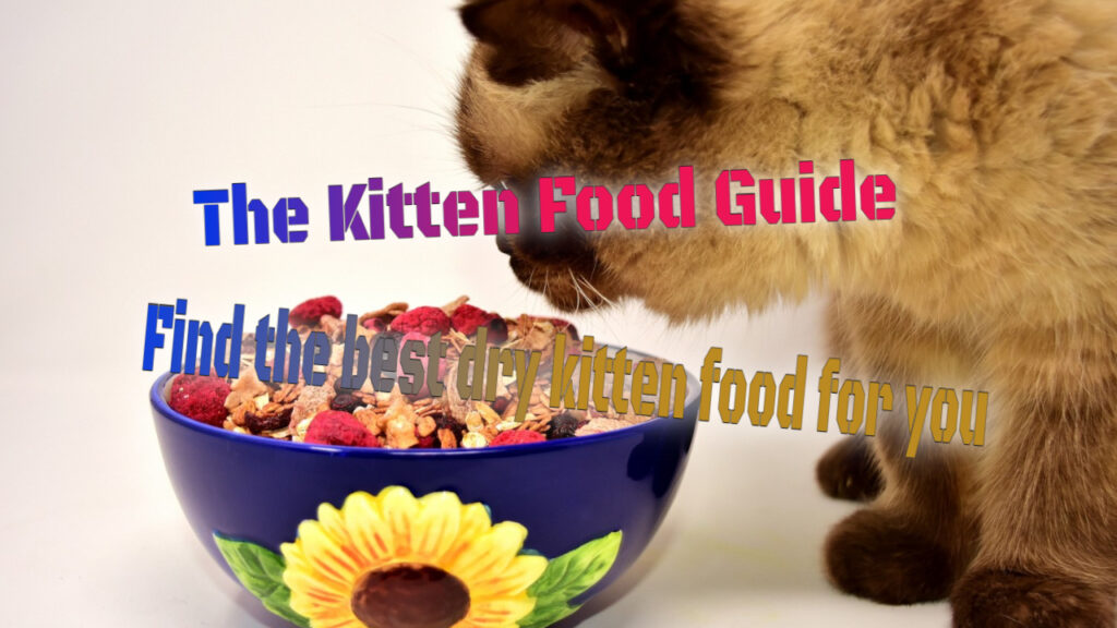 The Kitten Food Guide
