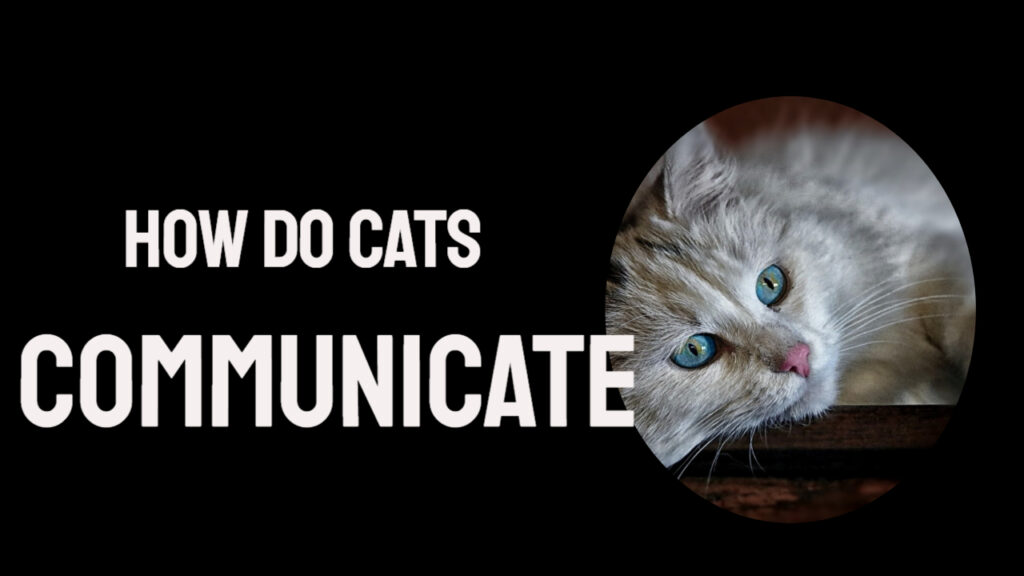Cats behavior And Communication