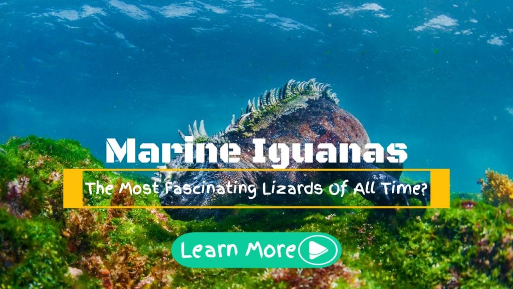 Marine Iguanas – The Most Fascinating Lizards Of All Time?