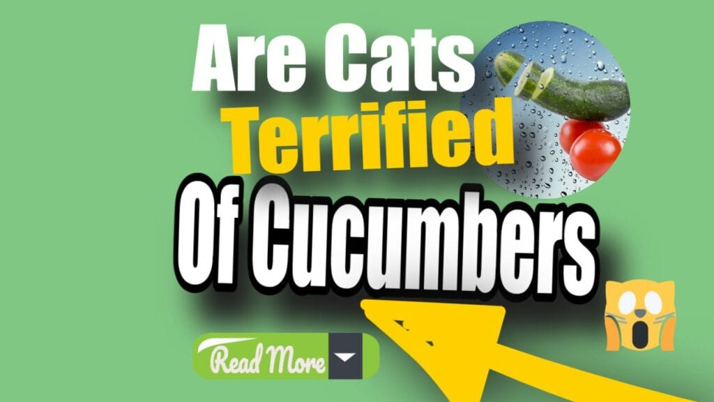 Why Are Cats Afraid Of Cucumbers?