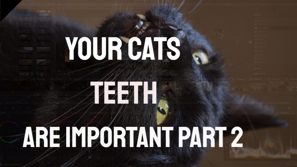 Home Dental Care Methods for Your Cat