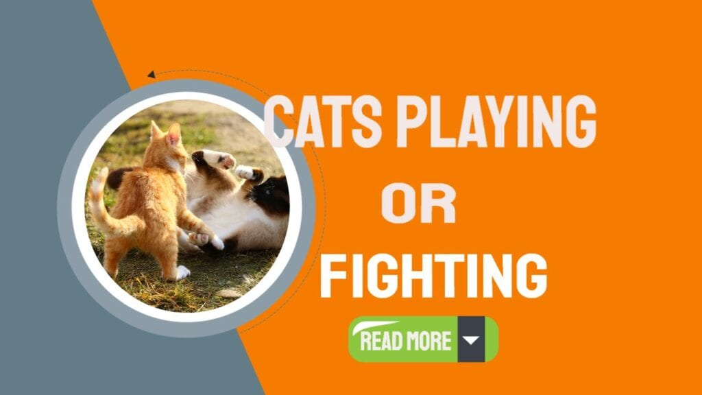 Are Cats Playing Or Fighting