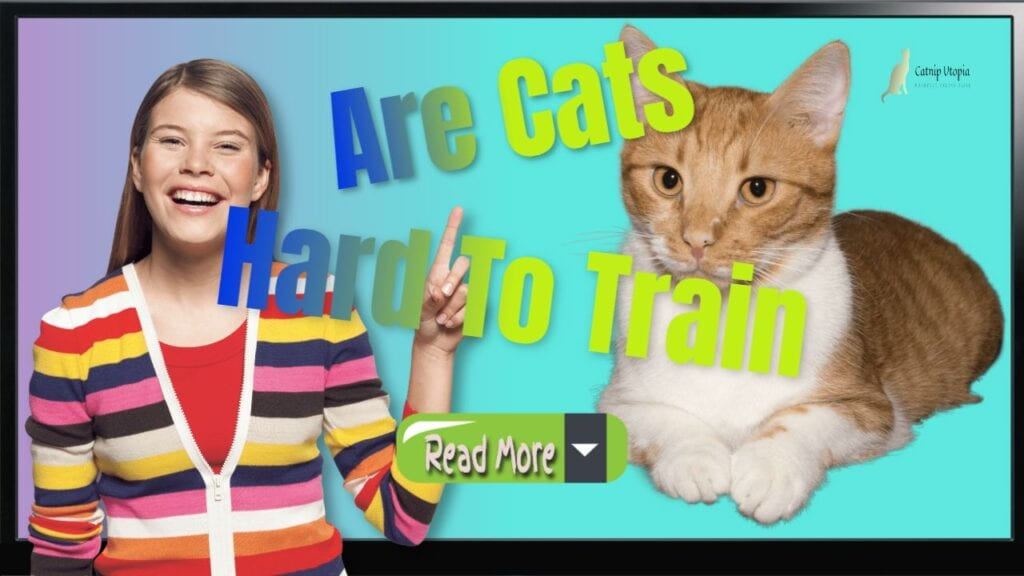 How to Train a Cat – Are Cats Hard To Train In Relation To Dogs?