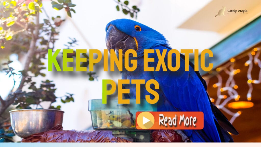 Keeping Exotic Pets What You Need to Know