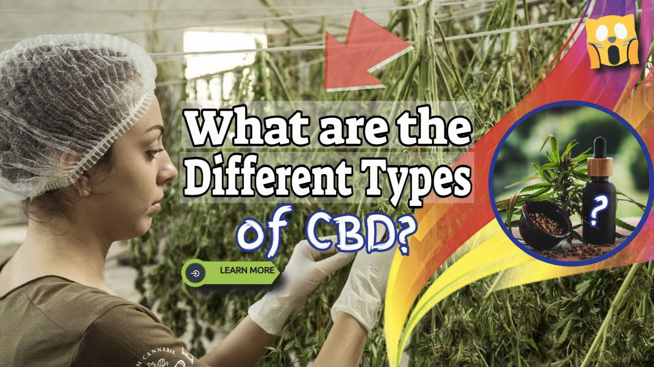 What are the Different Types of CBD? And the Best Kinds of CBD Supplements