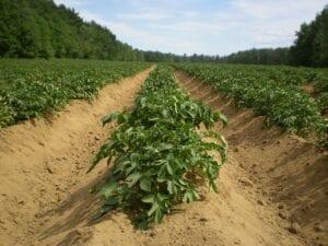 agriculture-farmland
