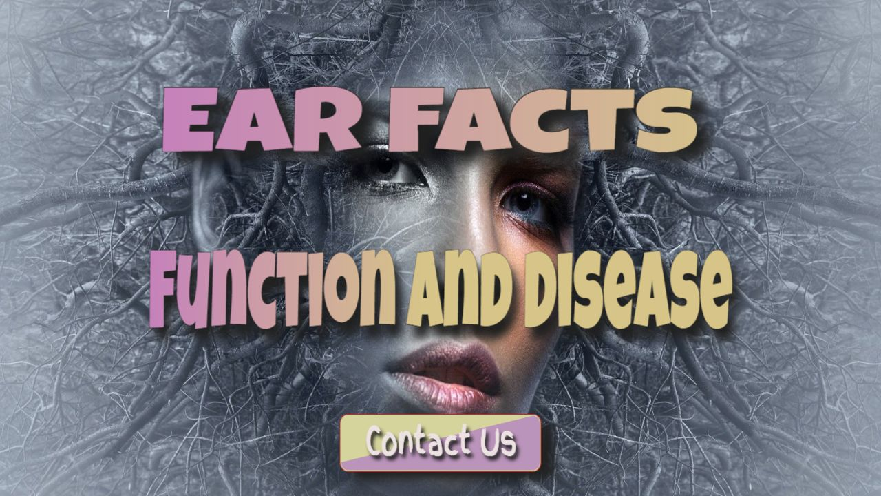 Interesting Facts About Human Ears: Functions of the Human Ear